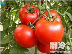 浙江杭州建造西红柿保鲜冷库造价