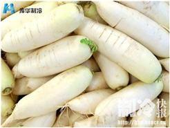 浙江杭州安装20吨萝卜保鲜冷库工程