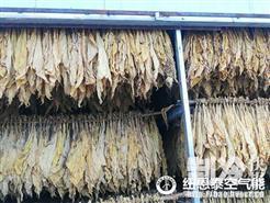 """烟叶烘烤""""大转型"""":福建龙岩居民用空气能烘干取代煤炭"""