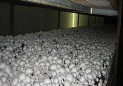 预算264万 大通县双孢菇生产基地扩建项目(专用空调购置)招标